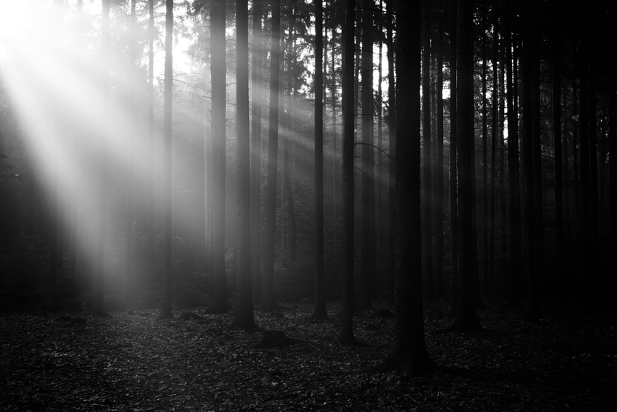 Deep forest with sun rays colored to black and white